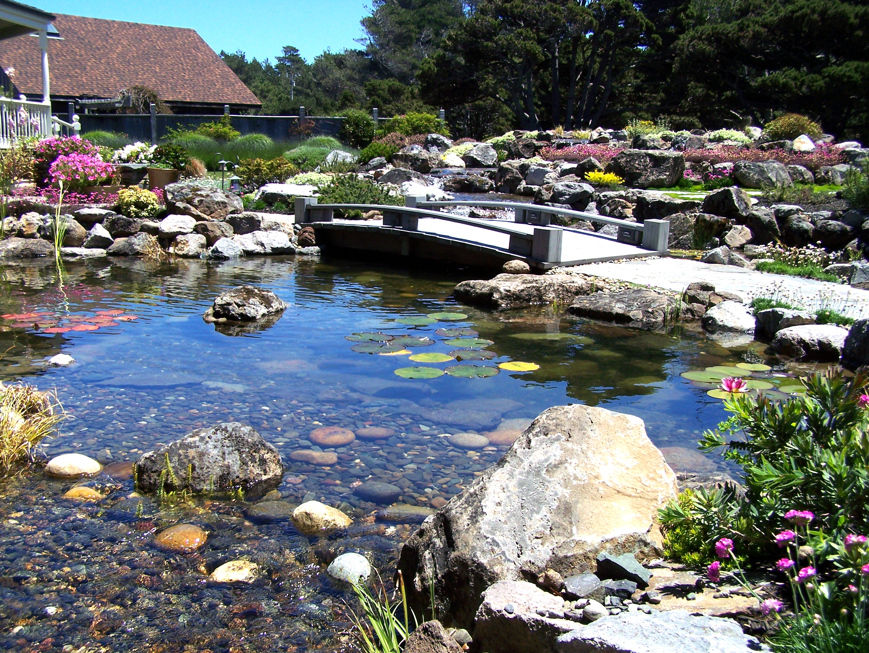 Top 4 Pond Problems and Solutions