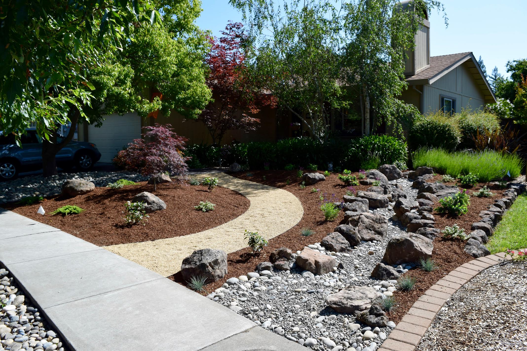 Photo of front yard lawn removal with drought tolerant planting.
