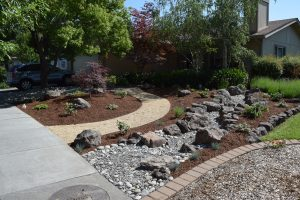 Front Yard Lawn Conversion to Low Maintenance Landscape