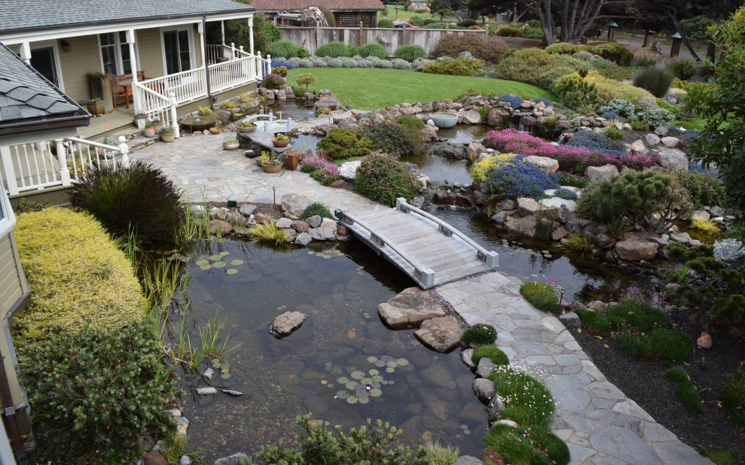 Rain Garden Basics For Your Home