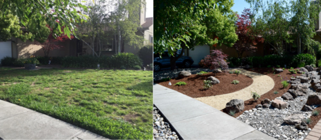 Four Options to Replace Your Lawn