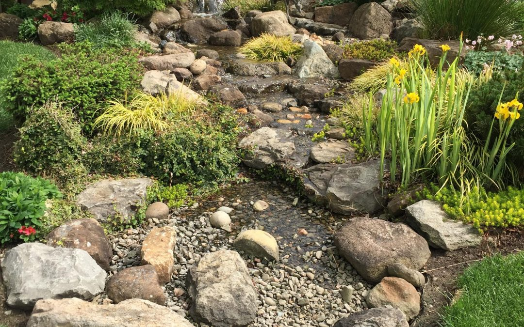 Pond Vs Pondless