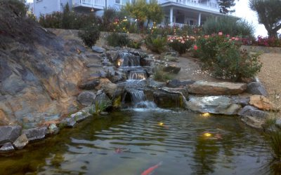 5 Amazing Ways to Add Natural Beauty to Your Pond