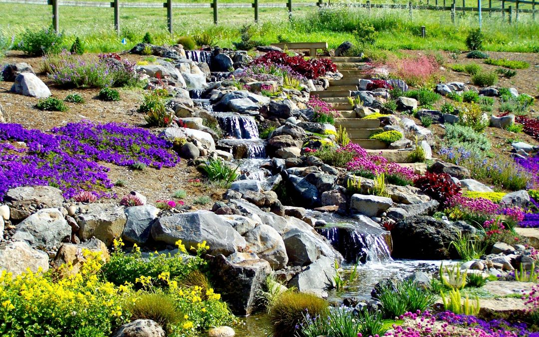 Landscaping Around Your Pond