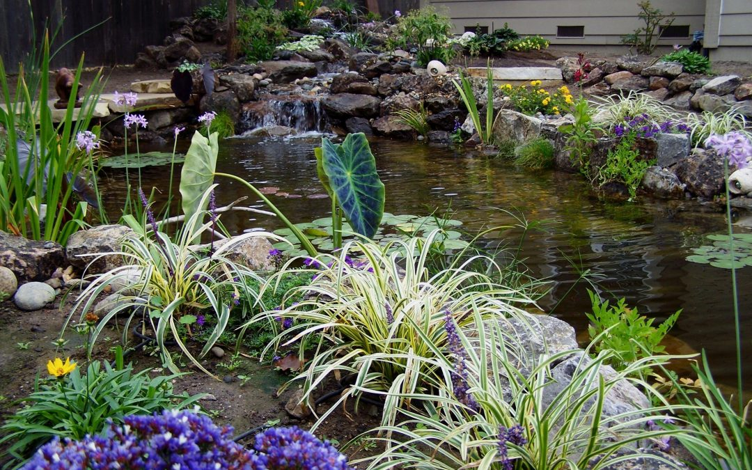 How Can I Learn the Latest Fall Pond Care Tips from Pond Contractors Near Me?