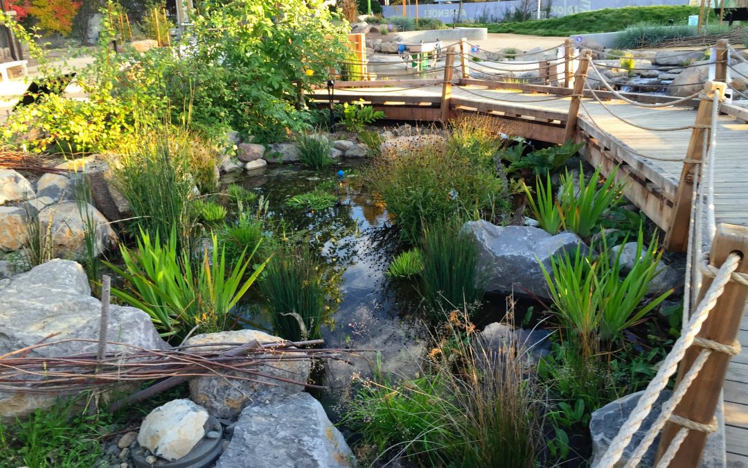 3 Compelling Reasons to Hire a Master Certified Aquascape Contractor