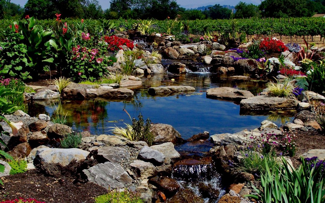 3 Compelling Environmental Reasons to Add a Small Pond to Your Property