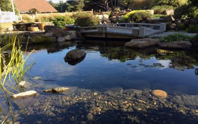 Planning a Pond? Here's a Useful Guide