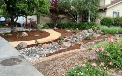 How to Take Care of Outdoor Plants in Summer?