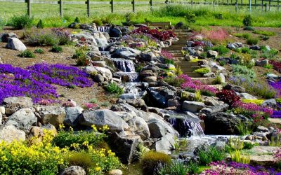 The Most Popular Water Garden Trends For 2019