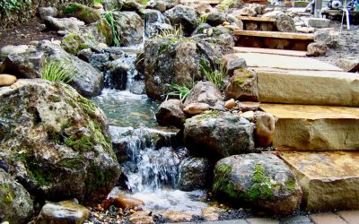 Do's & Don'ts of Water Pond Maintenance