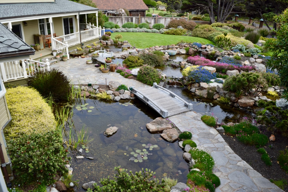 Choosing the Right Pond Plants for Your New Koi Pond