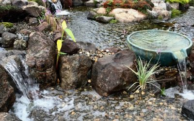 Tips to Install and Maintain a Koi Pond