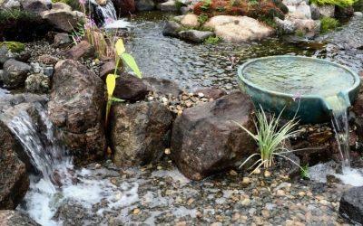 Keep Your Pond Ecosystem Eco-Friendly