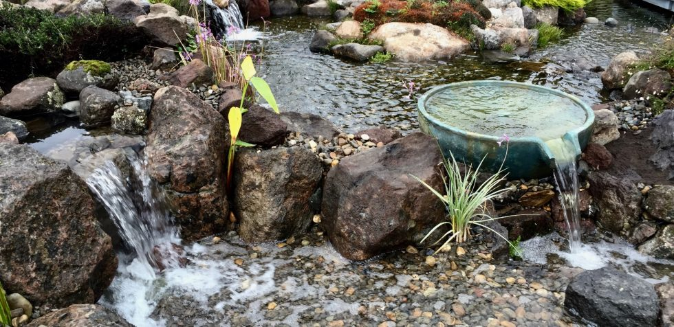 Keep Your Pond Ecosystem Eco-Friendly