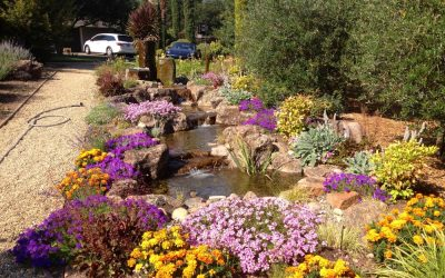 A Step-By-Step Guide to Building a Pond